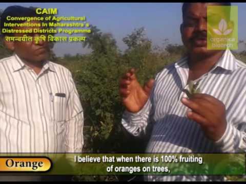 Magic gro- Revolutionising Orange cultivation worldwide!