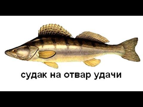 Русская Рыбалка 3 Урал! Теплая яма!  Судак на отвар Удачи!