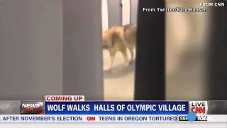 Repeat youtube video Sochi wolf was epic Jimmy Kimmel prank
