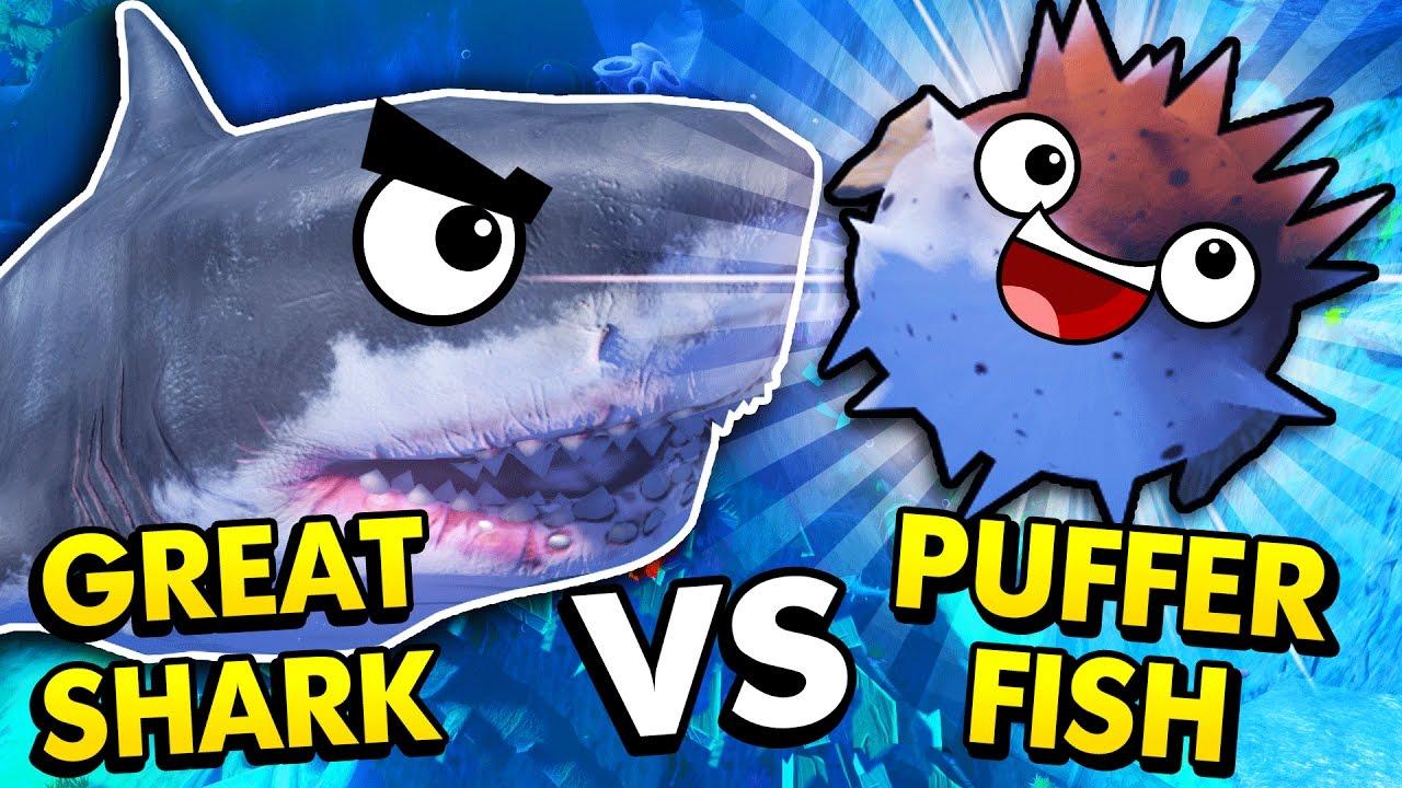 New puffer fish vs great white shark feed and grow fish for Blowfish vs puffer fish