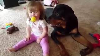Sweet Little Baby Sharing Her Toys With a Rottweiler