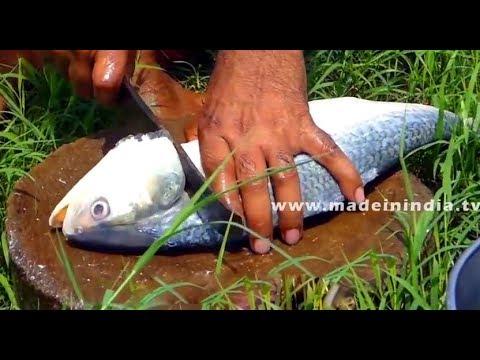 PULASA FISH CUTTING | TASTIEST FISH RECIPE ALL AROUND THE WORLD | ILISH FISH CATCHING & CUTTING