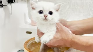 Leo, a kitten who cries in the first bath