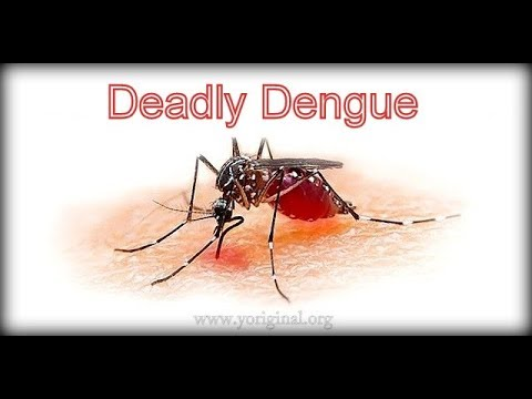 DENGUE Virus I Transmission I  Disease Classification I Management