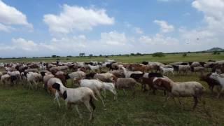 Video - Jessica: SFS Tanzania Wildlife Management Studies (Spring 2016)