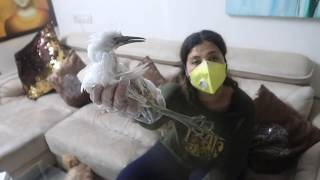 Rescued this dangerous BIRD & found its FAMILY | Ss Vlogs :-)