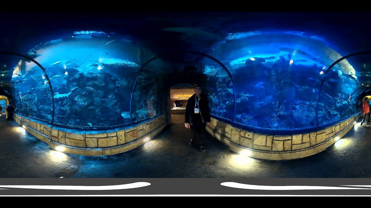 Walk among predators in. Shark Valley. Face your fears on the Shark Walk and walk over some of the world's biggest aquarium sharks, including Grey Nurse Sharks, before journeying deep under the sea and exploring the depths of Shark Valley.