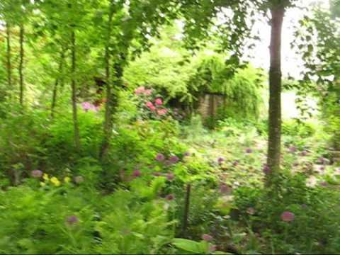 Jardin Allium aflatunens le24 Mai 08