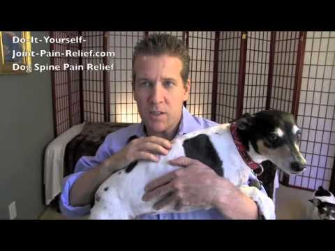 hqdefault - Back Pain Remedies For Dogs