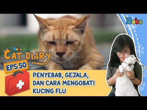 diary-kucing-eps-50---tips-merawat-kucing-yang-sedang-flu