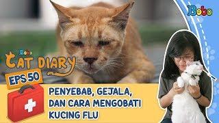 Diary Kucing Eps 50 - Tips Merawat Kucing yang Sedang Flu