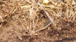 5 уроков, которые нам преподносят обычные муравьи