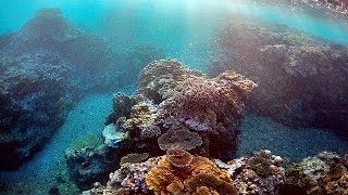 Great Barrier Reef bleaching kills 35% of coral in northern and central section