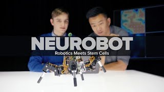 Neurobot: Robotics Meets Stem Cells