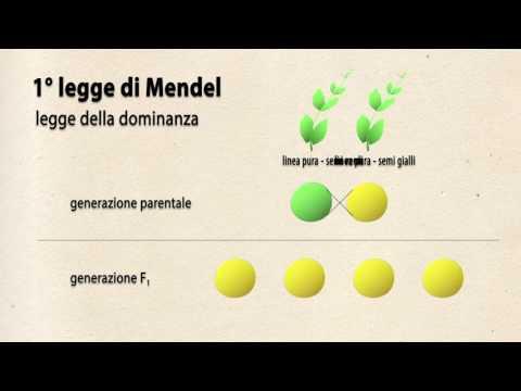 La prima legge di Mendel (tratto dai libri di Phelan e Pignocchino ...