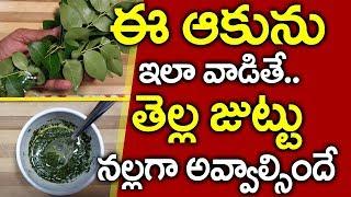 కొబ్బరినూనెలో ఈఆకు రసం కలిపి రాసుకుంటే !! I Curry Leaves for White Hair I Everything in Telugu
