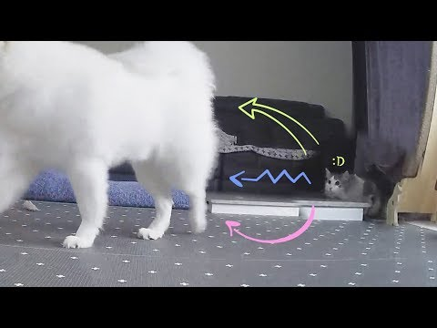 How Could My Cat Bathe So Well Like This!? from YouTube · Duration:  5 minutes 12 seconds