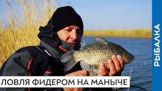 Карась на фидер осенью Рыбалка на реке Маныч