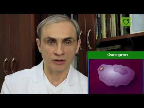 аутоиммунный тиреоидит АИТ регенерация восстановление ткани щитовидной железы