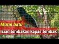 Murai Batu Tembakan Kapas Tembak Cocok Untuk Masteran Terapi  Mp3 - Mp4 Download