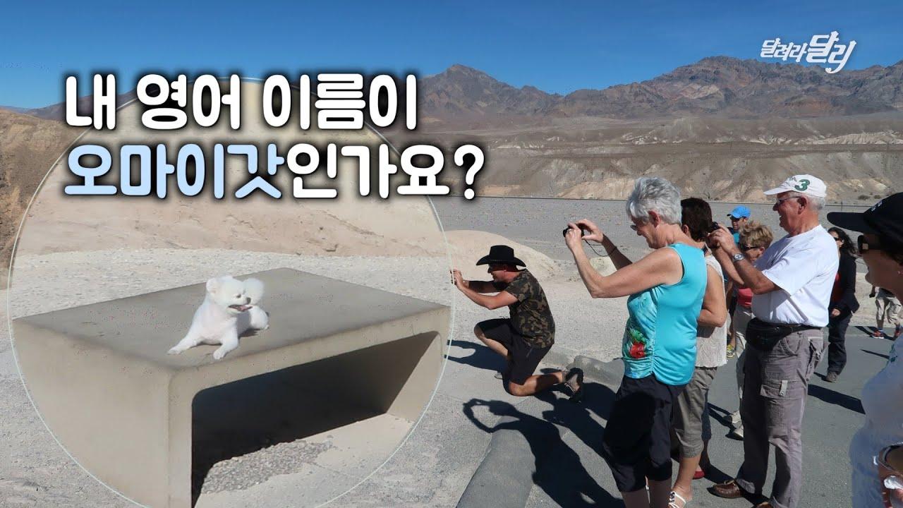 한국에서 여행 온 강아지 달리를 본 외국인 반응