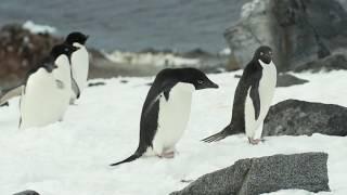 Gambar cover La vita dei meravigliosi pinguini dell'Antartico