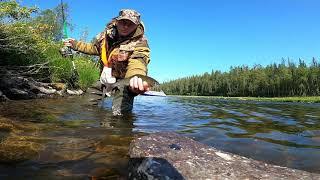 Шикарная рыбалка на горной реке ОГРОМНЫЙ ХАРИУС Часть 1