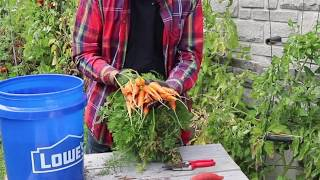 Growing Carrots and Beets