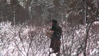 Зимова полювання на качок в заполярній тайзі / A winter duck hunting
