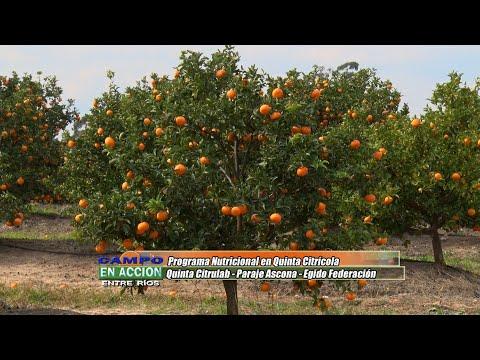 Darío Toller -  Productor Citrícola - Plan de Fertilización Foliar en Quinta Citrulab