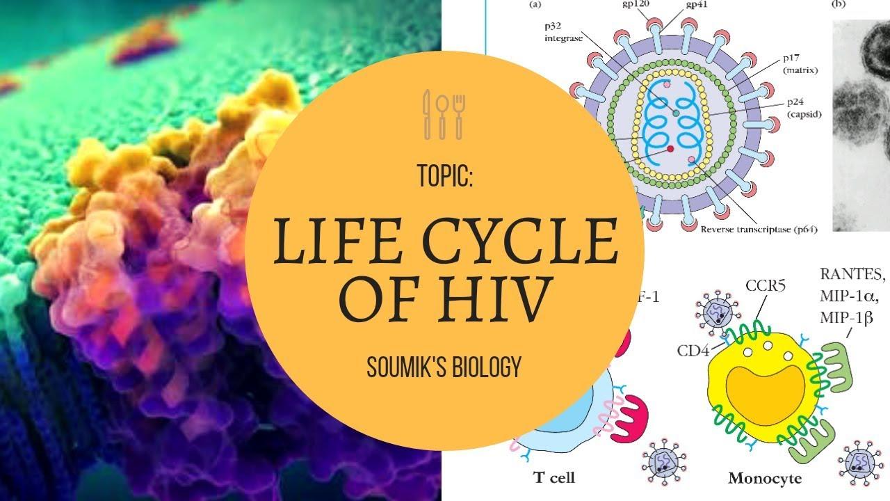 LIFE CYCLE OF HIV VIRUS.(BENGALI) - YouTube