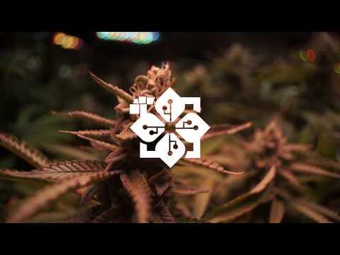 Growers International ($GRWI) - An Introduction