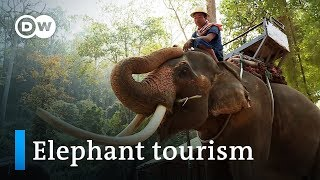 Elephant rides in Thailand: Fun or cruel? | DW Documentary