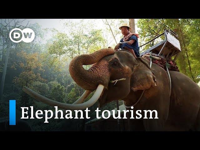 Safari паркін ойнаңыз