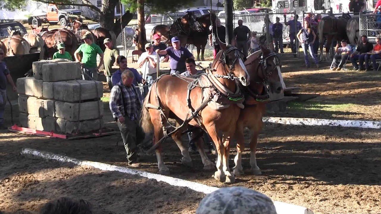 Download Draft Horse Pull 2013 Deerfield Fair NH Pulling Video 4