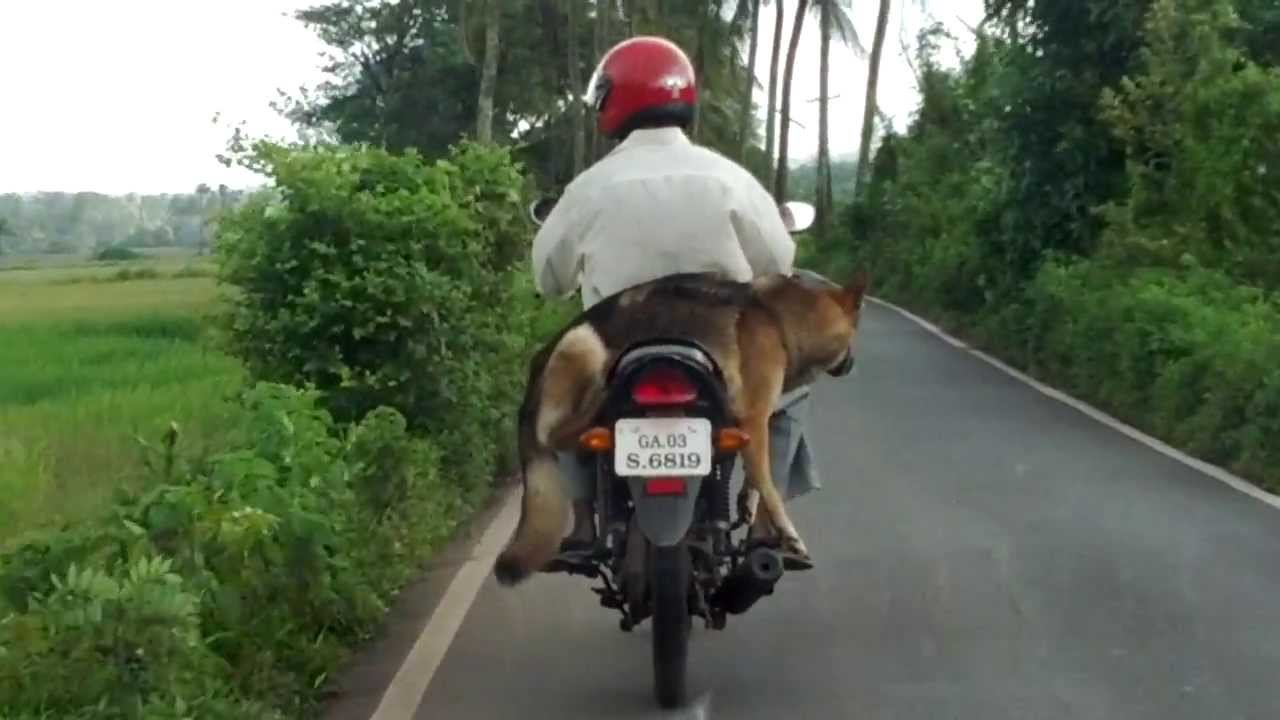 How To Carry Dog On A Bike Must Watch Video Youtube