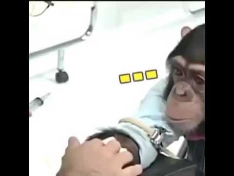 Gambar Monyet Takut Disuntik Youtube Mewarnai Jarum Suntik