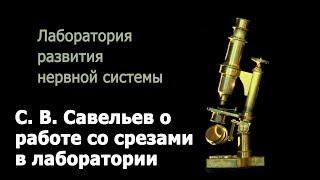 С. В. Савельев о работе со срезами в лаборатории