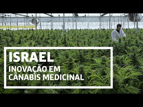 Como Israel Despontou Na Pesquisa Da Maconha Medicinal