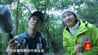 [远方的家]行走青山绿水间 寻访西黑冠长臂猿| CCTV中文国际