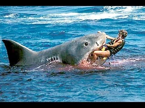 Á�笑い ɝ�白 Â�メの攻撃 ĺ�間にサメの攻撃 Ũ�楽ゾーン Youtube