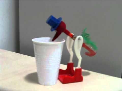 El pajarito que toma agua solo youtube for Toma de agua