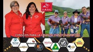 CONSEJOS PARA LA CRIANZA: DANDY GAME FOWL