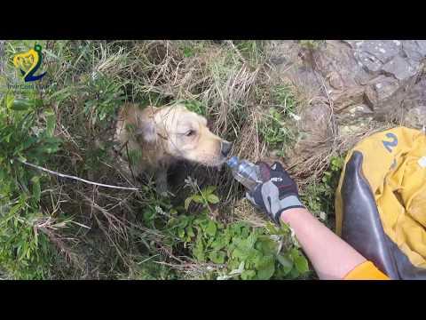 Dog Cliff Rescue - Irish Coast Guard Howth Unit