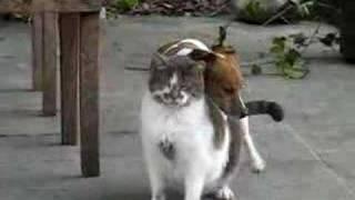 Entre chien et chat ...