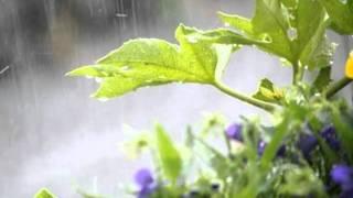 長崎の雨(歌てんてん 演奏AMIさん)元歌 川中美幸