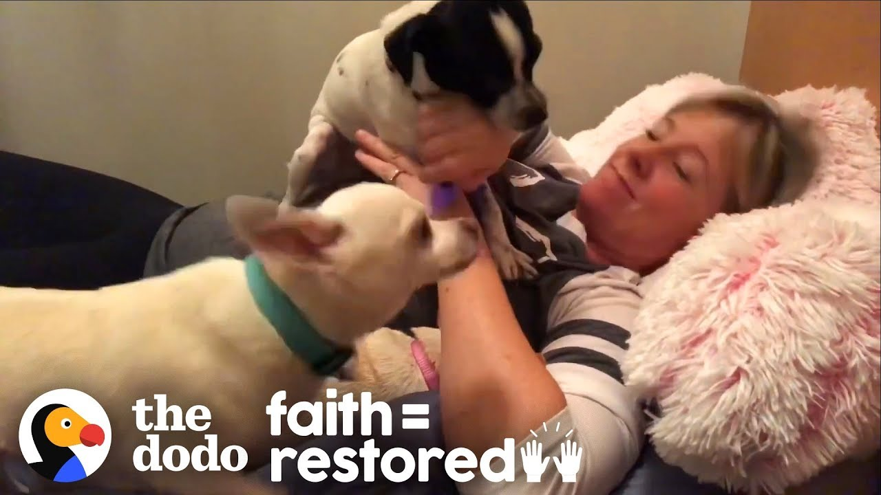 Woman Has Slumber Parties In Animal Shelter To Get Pets Adopted   The Dodo Faith = Restored