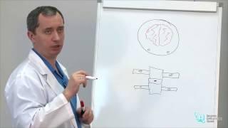 Упражнения для шеи доктора Шишонина (видео урок)