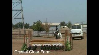 Large hunter jumper equitation pony for sale Petaluma Sonoma County California