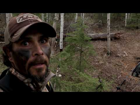 The Chronicles: Bowhunting Black Bears From The Ground